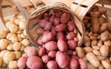 Tuberi e patate norvegesi