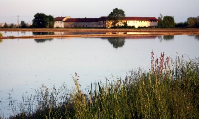Risaie, Agricoltura biodinamica