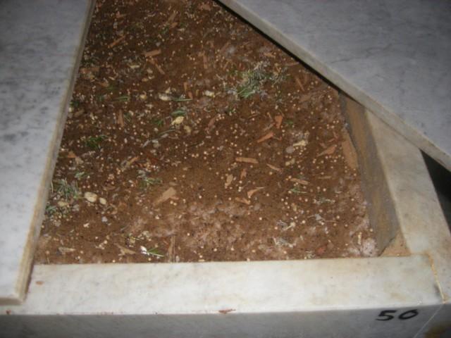 La conca di marmo con il lardo appena inserito e ricoperto con la concia