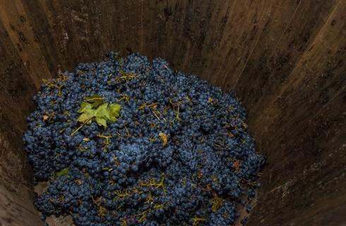 Vini anticrisi: Falerno Rosso