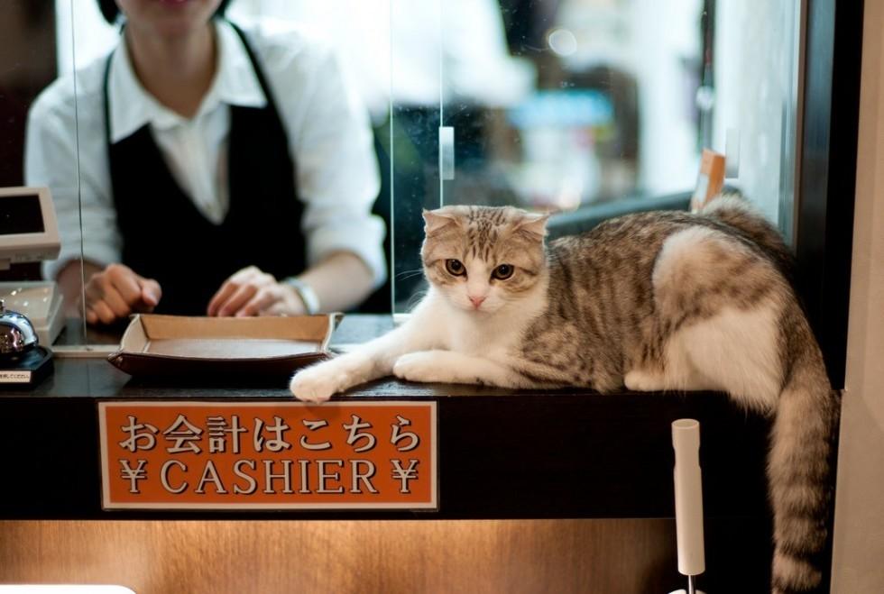 I ristoranti più strani del mondo - Foto 4