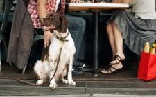Cani al ristorante