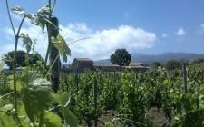 Vini anticrisi: Etna Bianco