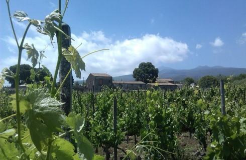 Vini anticrisi: Etna Bianco Erse Tenuta di Fessina