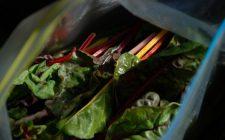 Bietole con pomodoro e mozzarella: la ricetta di un contorno sfizioso