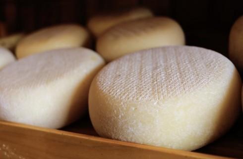 I migliori formaggi d'Italia: le regioni del Sud e le Isole