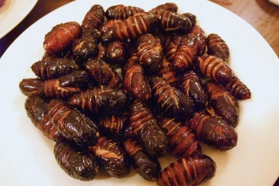Per stomaci forti: insetti da mangiare - Foto 1
