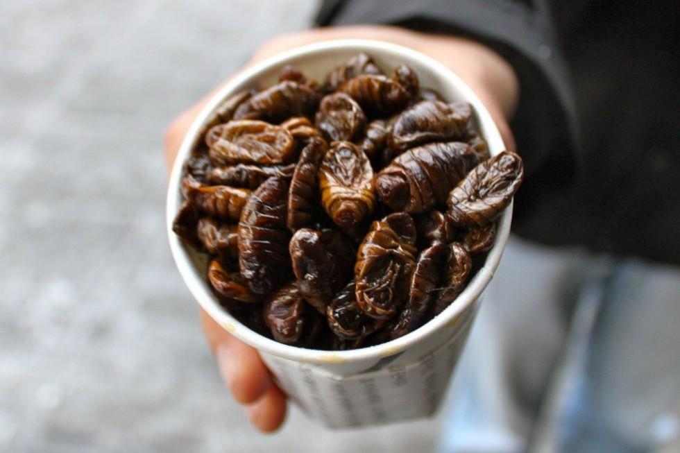 Per stomaci forti: insetti da mangiare - Foto 2