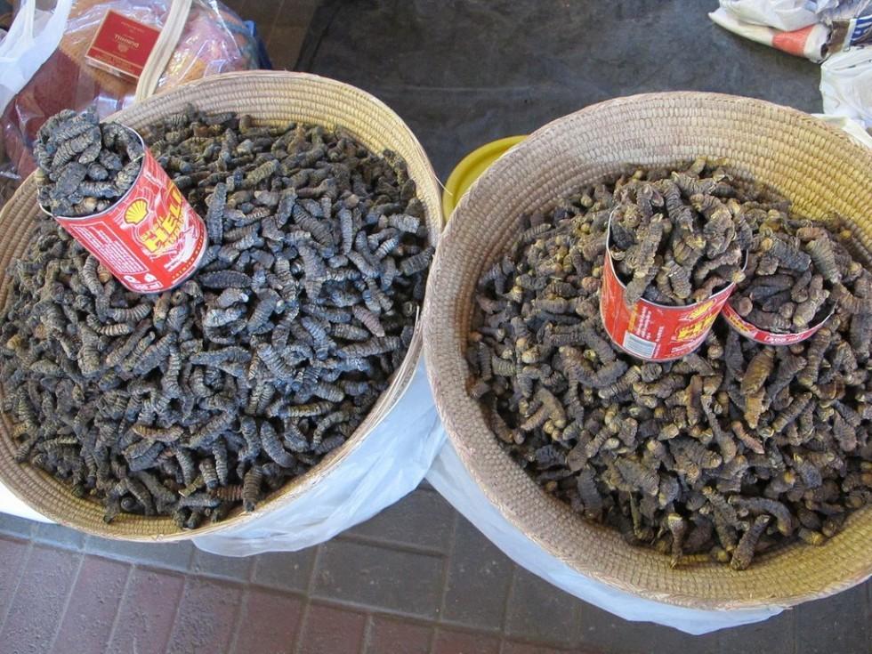 Per stomaci forti: insetti da mangiare - Foto 3