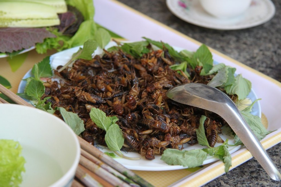 Per stomaci forti: insetti da mangiare - Foto 9