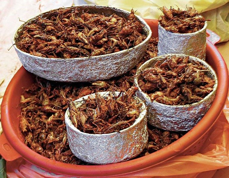 Per stomaci forti: insetti da mangiare - Foto 8