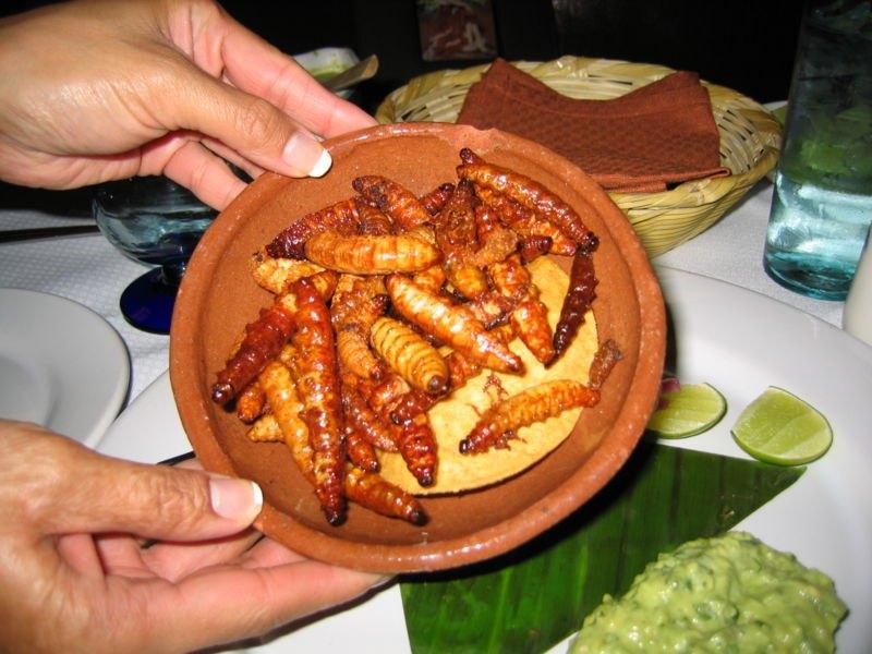 Per stomaci forti: insetti da mangiare - Foto 10