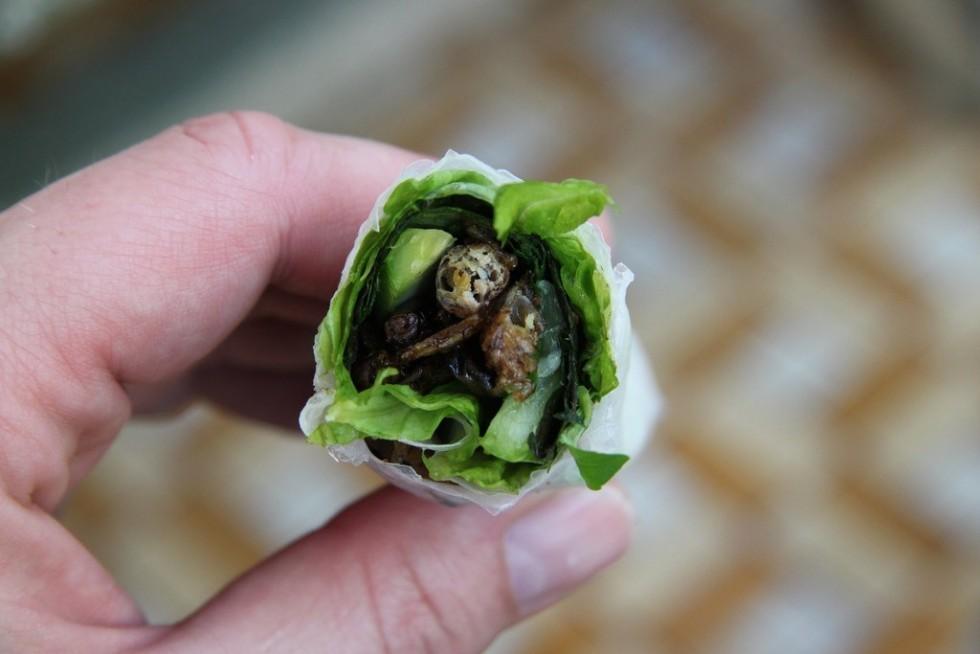Per stomaci forti: insetti da mangiare - Foto 12