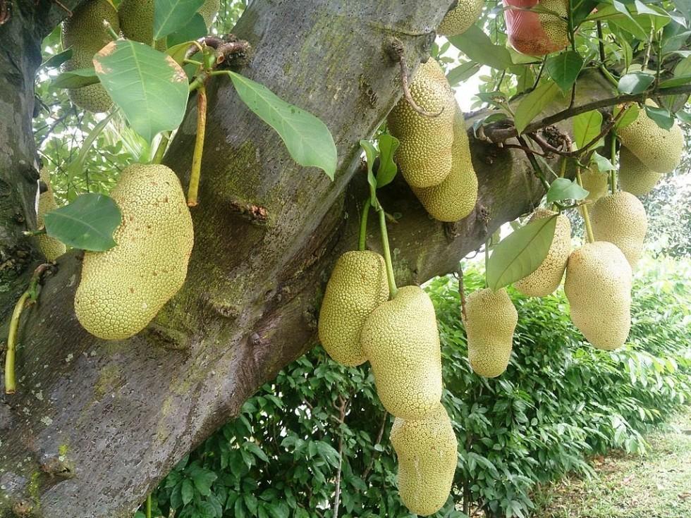 I frutti più strani del mondo - Foto 23