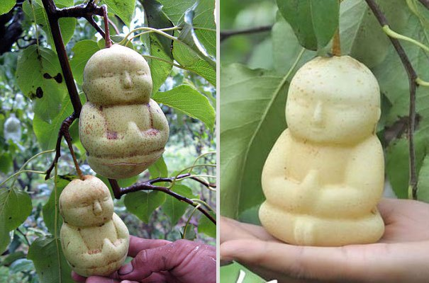 I frutti più strani del mondo - Foto 18