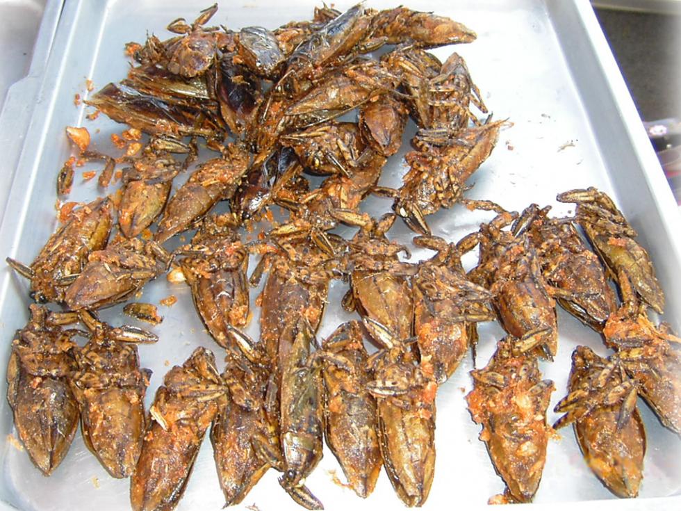 Per stomaci forti: insetti da mangiare - Foto 16