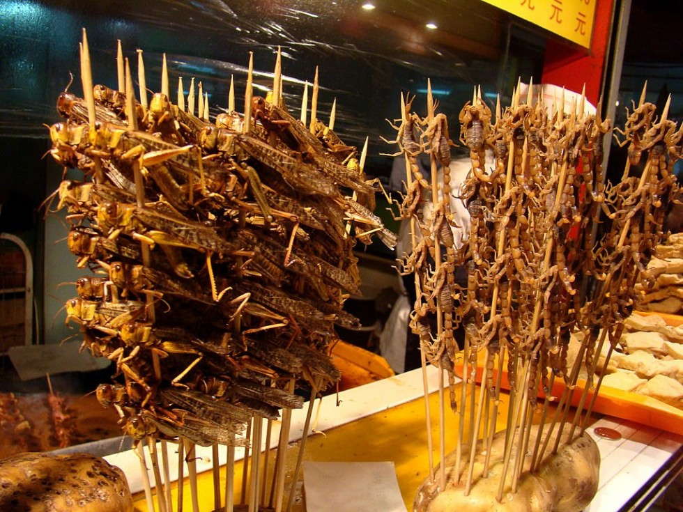 Per stomaci forti: insetti da mangiare - Foto 17