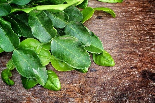 foglie di lime kaffir