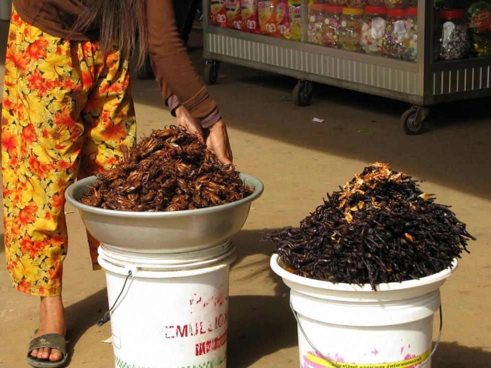 Per stomaci forti: insetti da mangiare - Foto 19