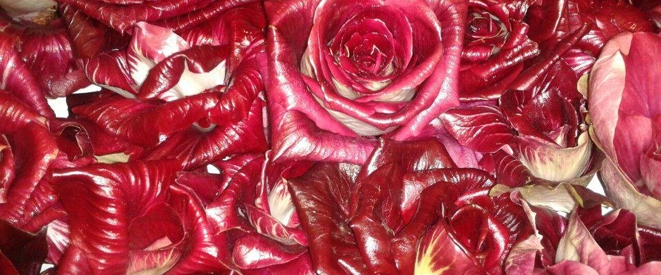 Radicchio rosso di Gorizia: una rosa senza spine