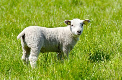 Pasqua vegan: 5 ricette per un menù cruelty free