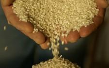 Il riso degli inferi