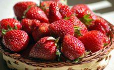 Le 5 ricette salate con le fragole, sapori nuovi tutti da scoprire