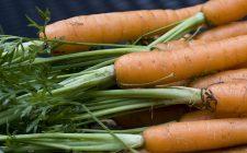 Le carote al curry e yogurt da preparare per il contorno sfizioso