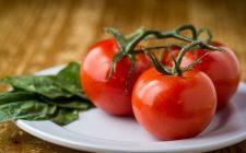 Pomodori al gratin al forno, ecco come prepararli