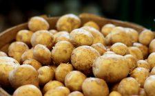 Le patate novelle da fare in padella con la buccia, ecco la ricetta
