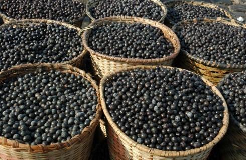 Wonder Food brasiliano: açai