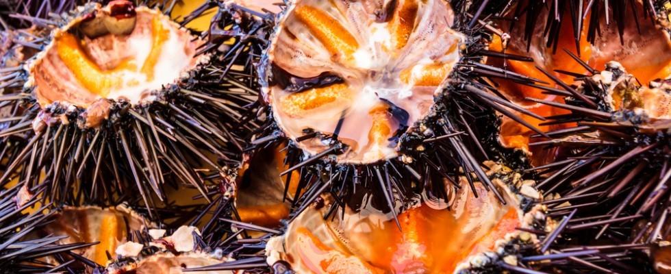 I segreti del crudo di mare alla barese