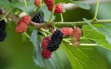 8 frutti da riscoprire per l'estate