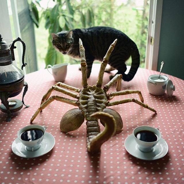 Bravissima Christine McConnell: torte dark e fotografia - Foto 1