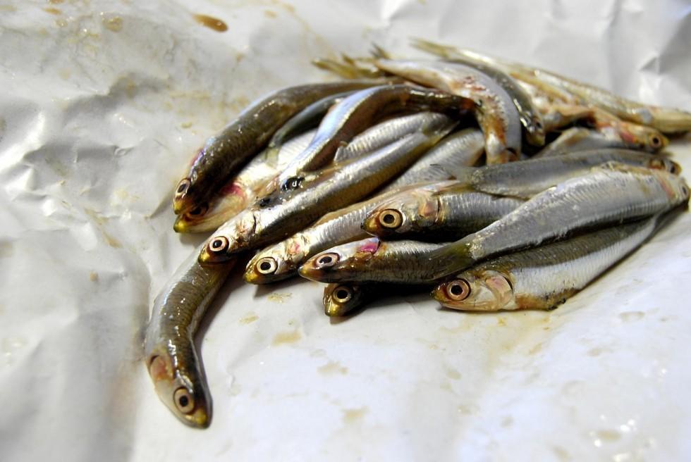 Tutto il pesce dell'estate - Foto 1