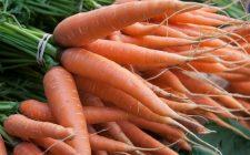 Ecco le carote con aceto e origano con la ricetta facile
