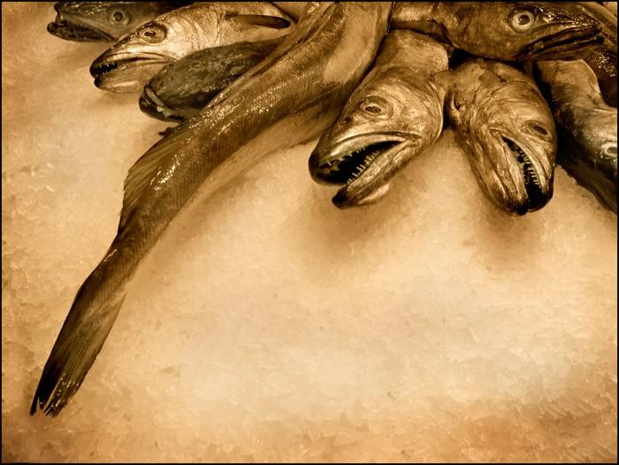 Tutto il pesce dell'estate - Foto 6