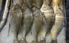 Tutto il pesce dell'estate