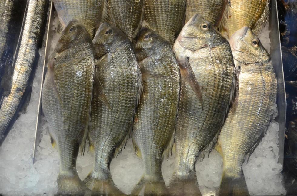 Tutto il pesce dell'estate - Foto 7