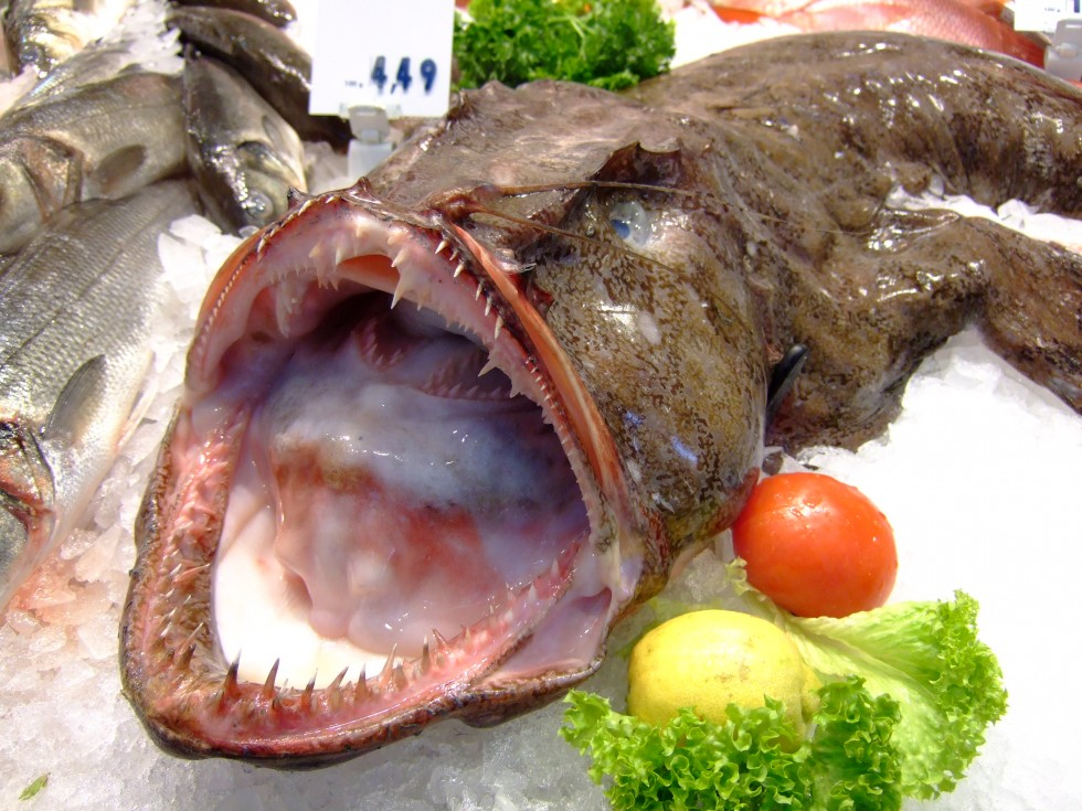 Tutto il pesce dell'estate - Foto 4