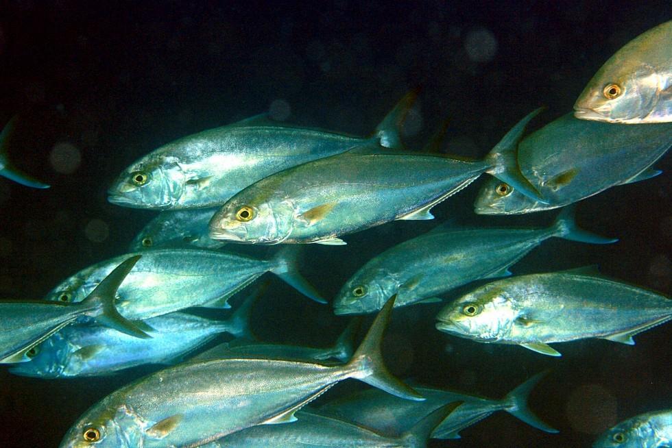 Tutto il pesce dell'estate - Foto 19