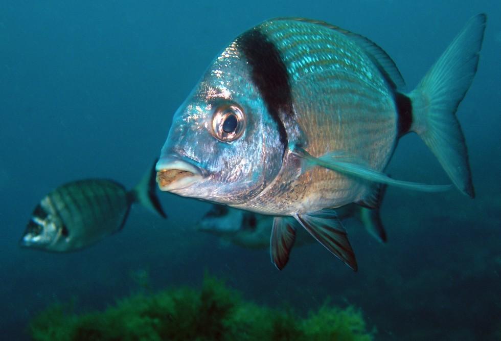 Tutto il pesce dell'estate - Foto 18