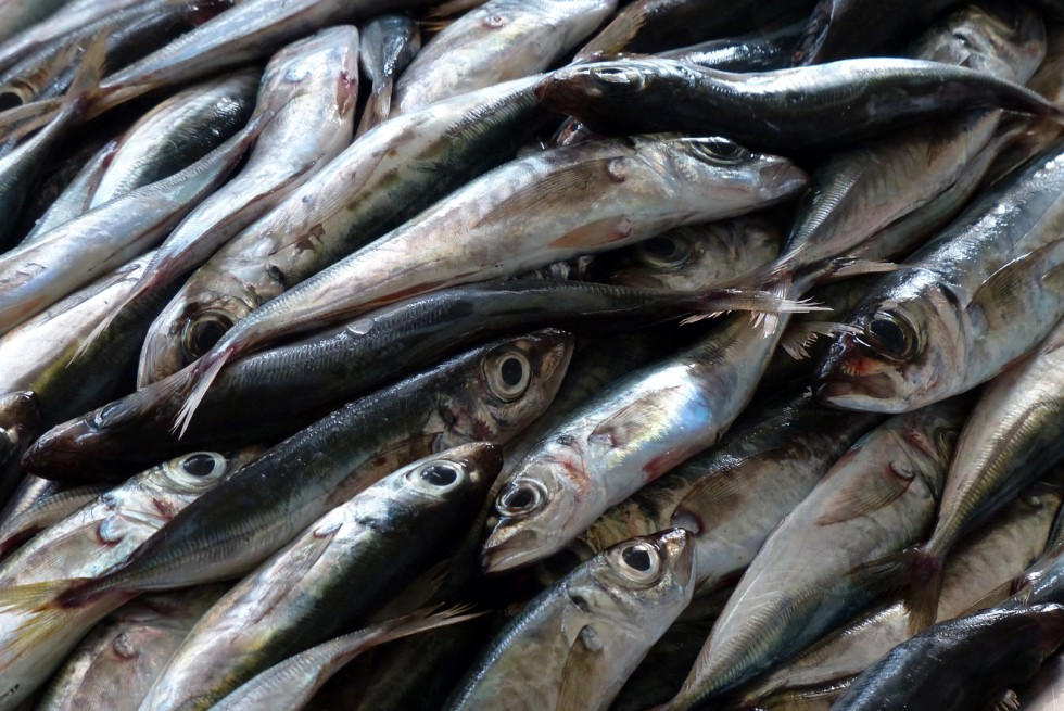 Tutto il pesce dell'estate - Foto 15