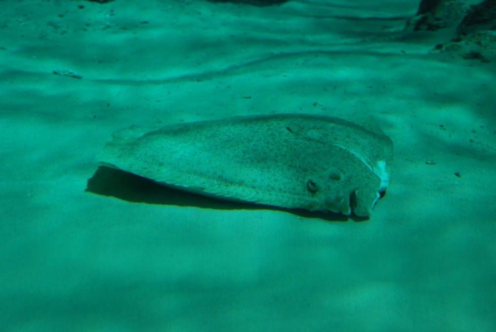 Tutto il pesce dell'estate - Foto 16