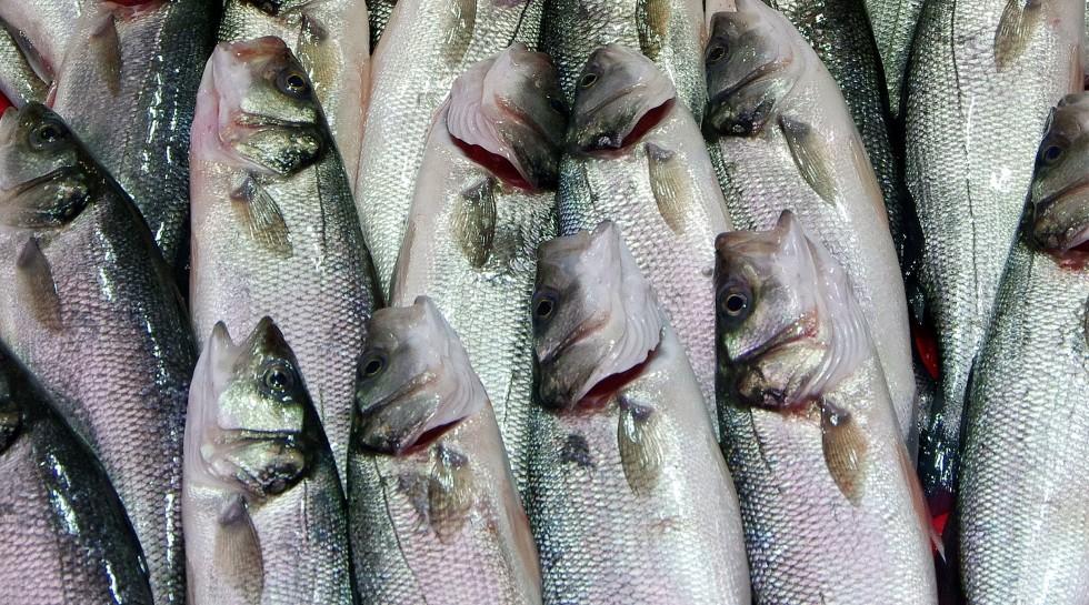 Tutto il pesce dell'estate - Foto 17