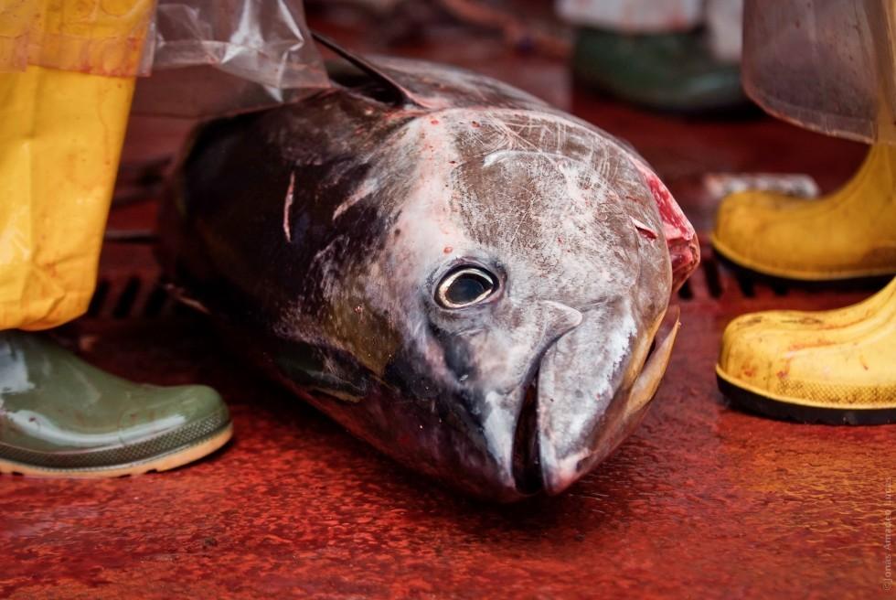 Tutto il pesce dell'estate - Foto 21
