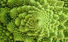 Broccoli contro il tumore al seno: un'altra conferma
