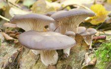 I funghi sott'olio da preparare con la ricetta per il Bimby