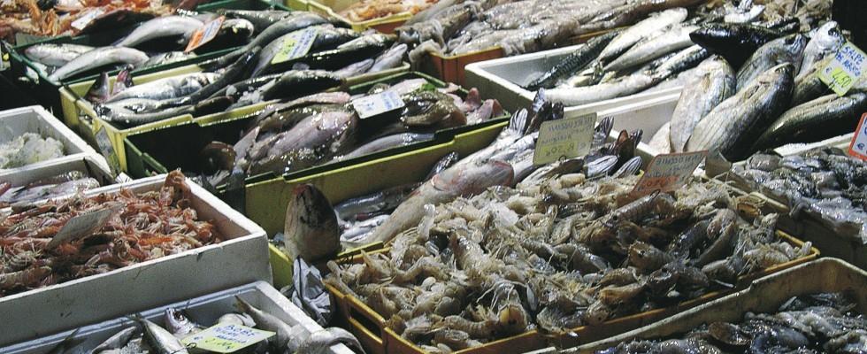 5 splendide ricette con il pesce povero