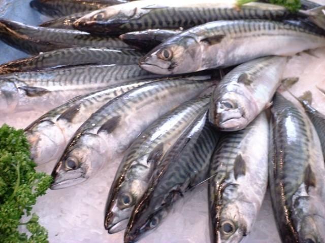 Pesce povero 5 ricette per cucinarlo agrodolce for Cucinare sgombro